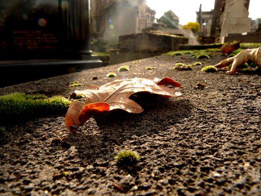 Feuille tombée sur une tombe