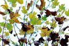 feuilles a feuilles