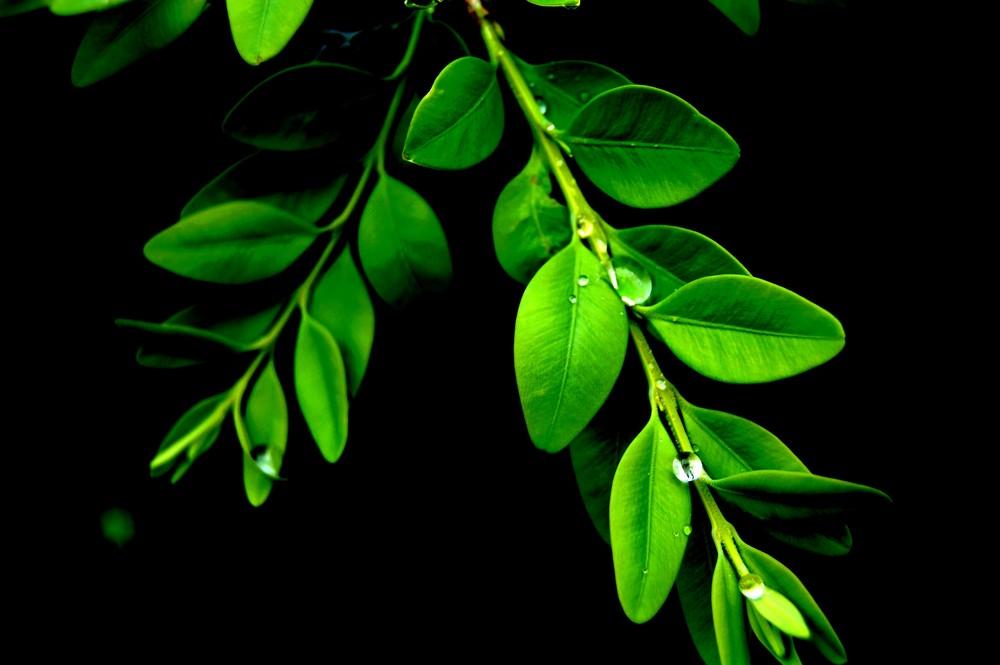 feuilles apres la pluie