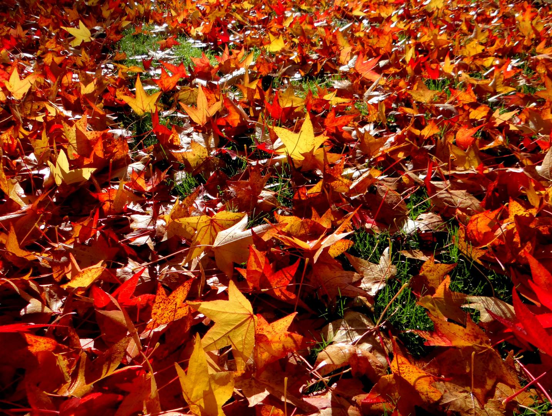 Feuilles d 39 automne photo et image les saisons automne - Image feuille automne ...