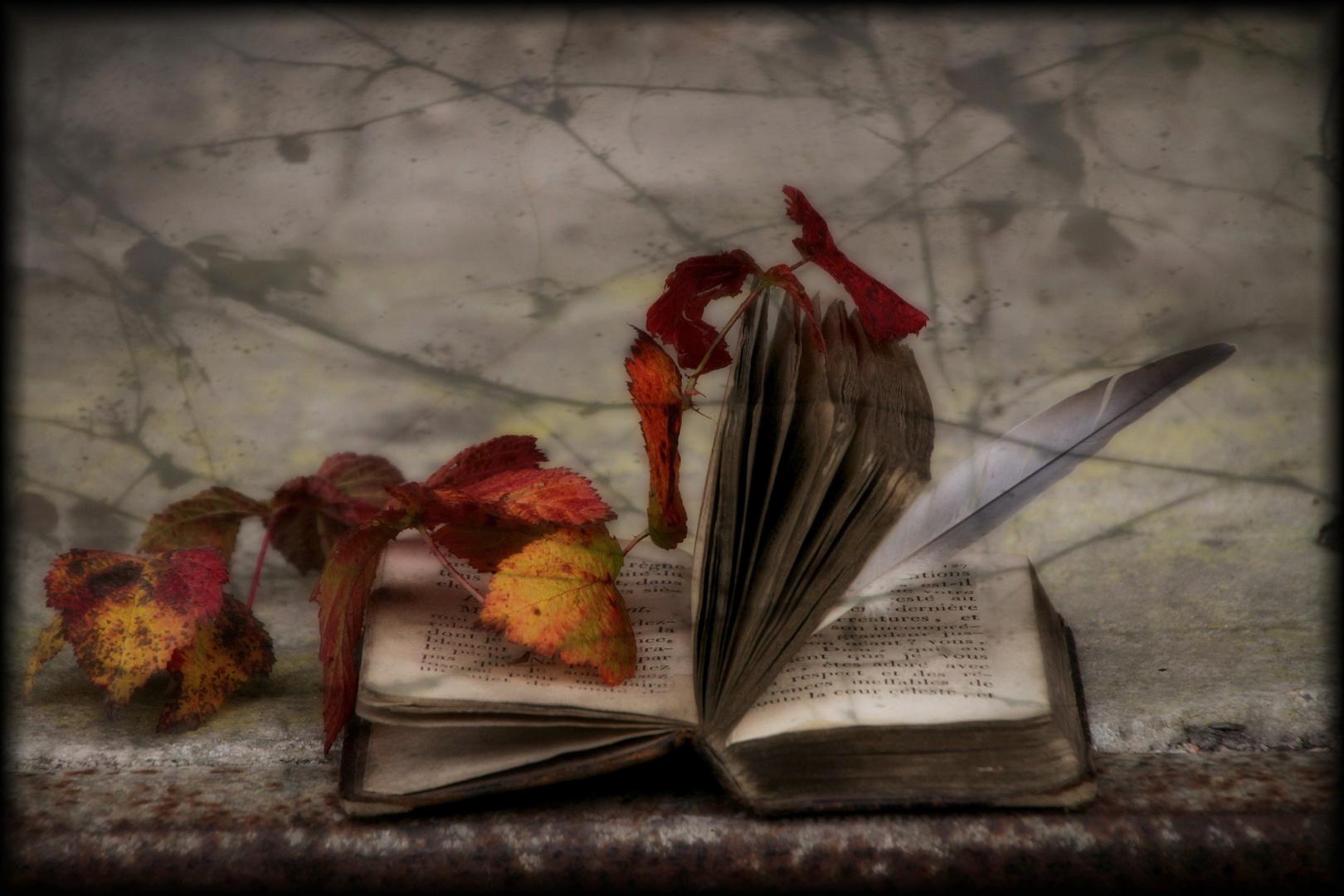 Feuilles d'automne ...