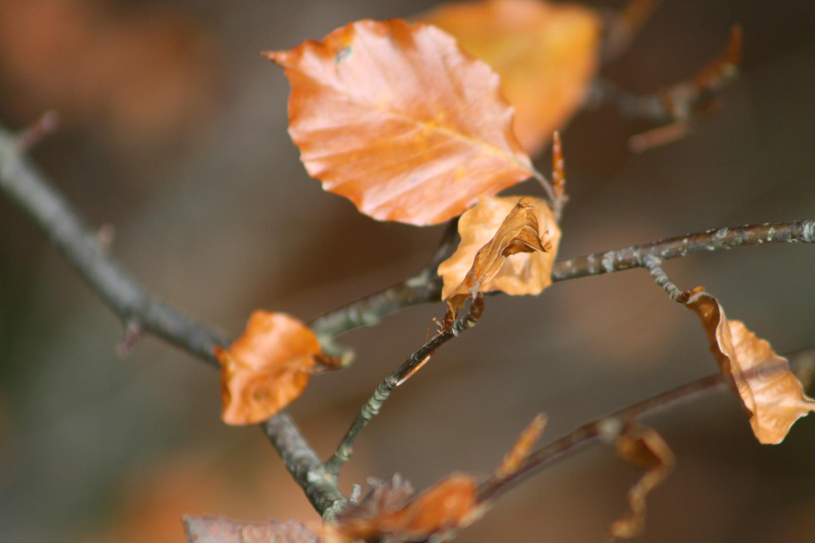 feuilles d'automne lac blanc