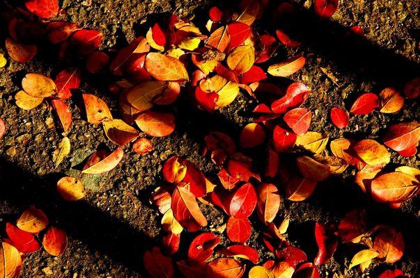 Feuilles en rouge et or