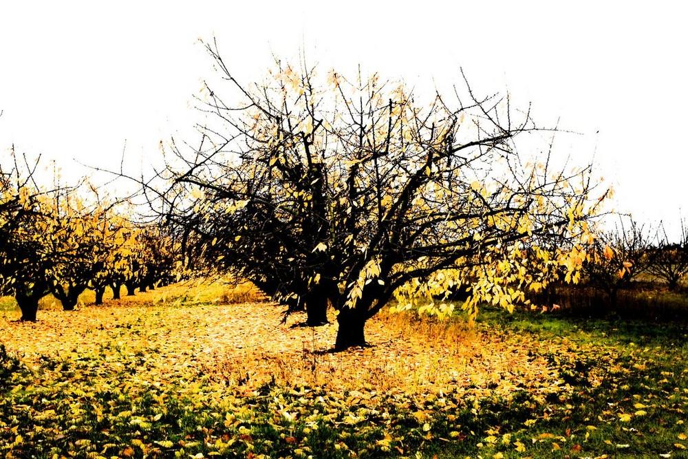 feuilles jaunes