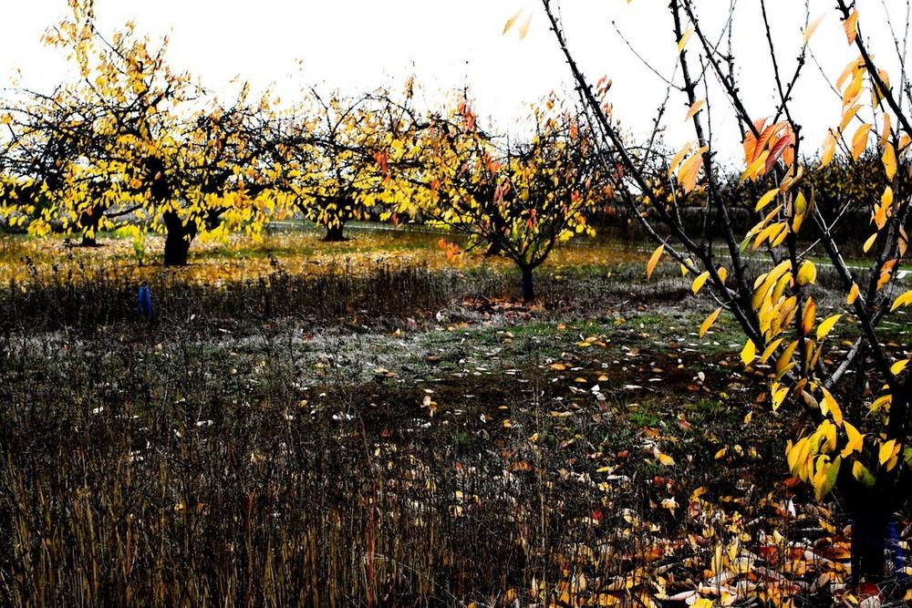 feuilles jaunes2