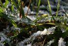 feuilles ornées de glace