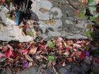 feuilles par terre/ Blätter am Boden