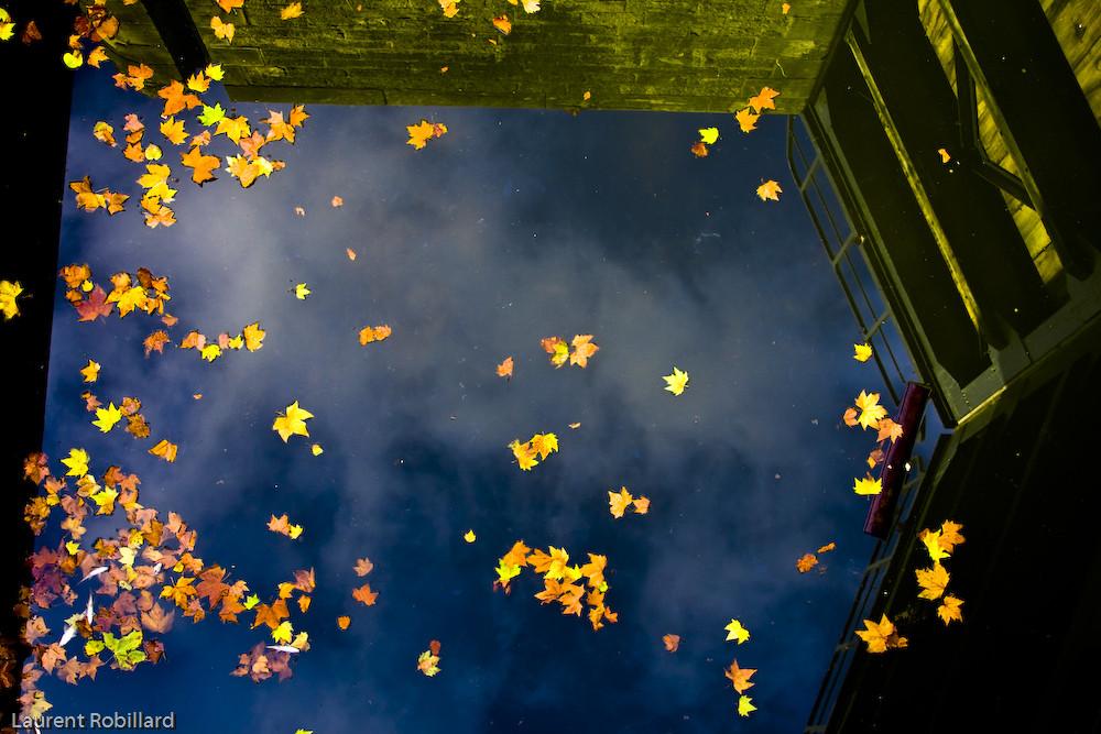feuilles tuées