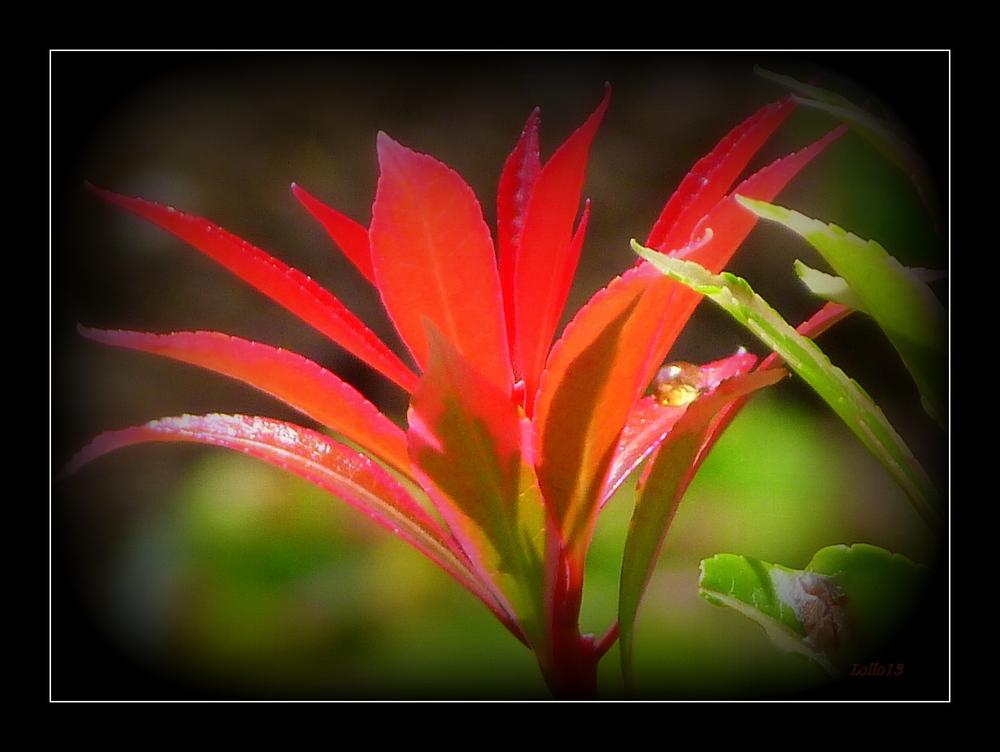 Feurige Blätter ...