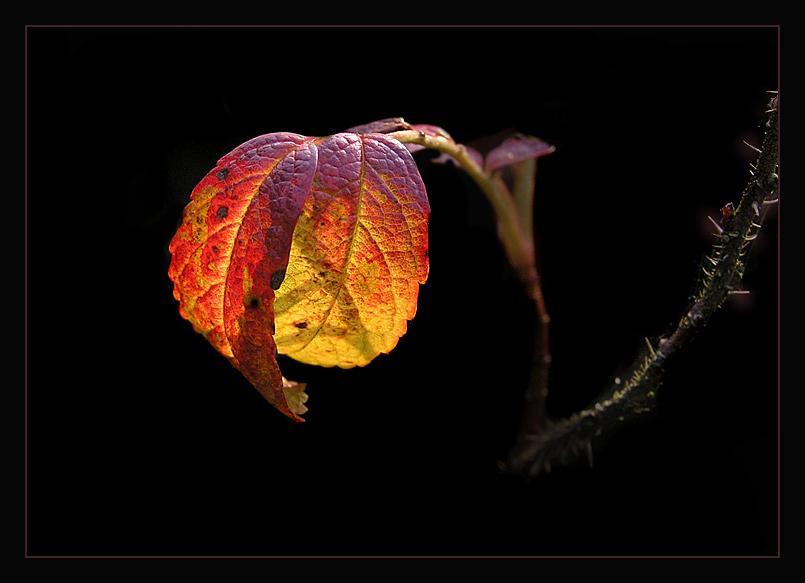 feuriger Herbst Reload