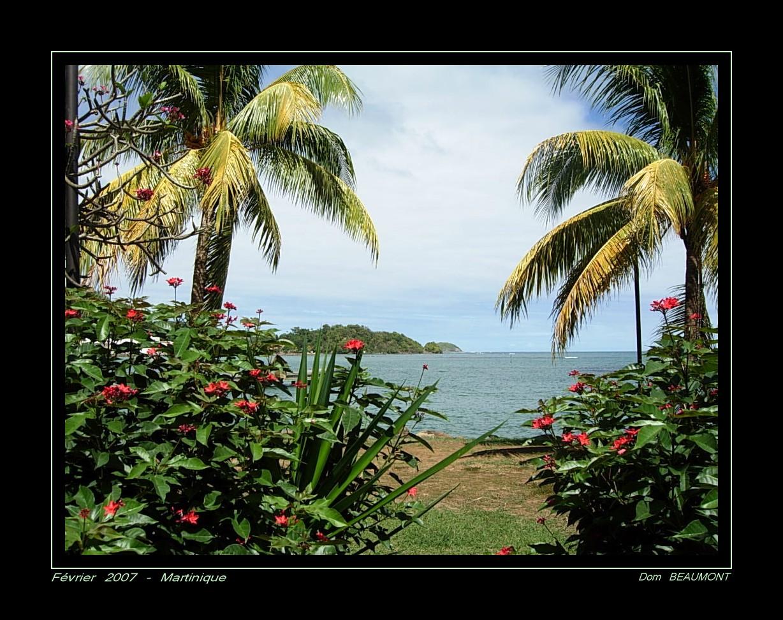 Février 2007 - Martinique - Sur la côte Est -
