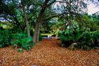 Fewell Park
