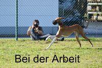 FF-fotodesign.de