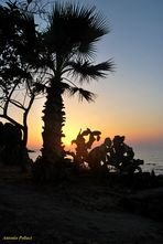 fichidindia e palma - Cefalù