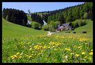 Fichtelberg im Sommer