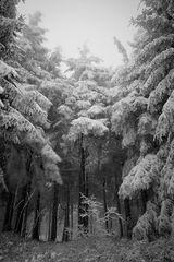 Fichtenkopf im Winter