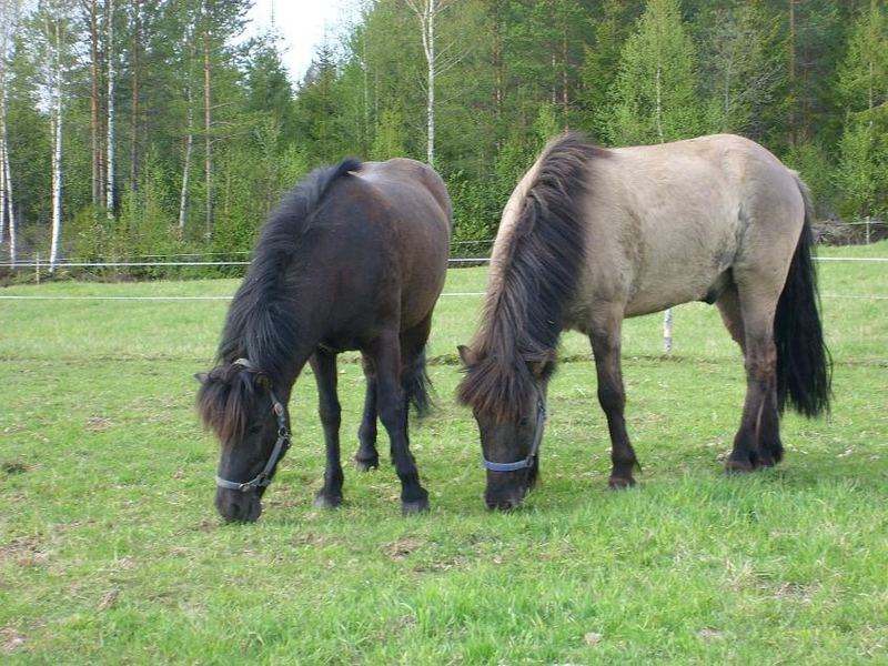 Fidla & Moi (Maastotalli Kistill 21.5.-07)