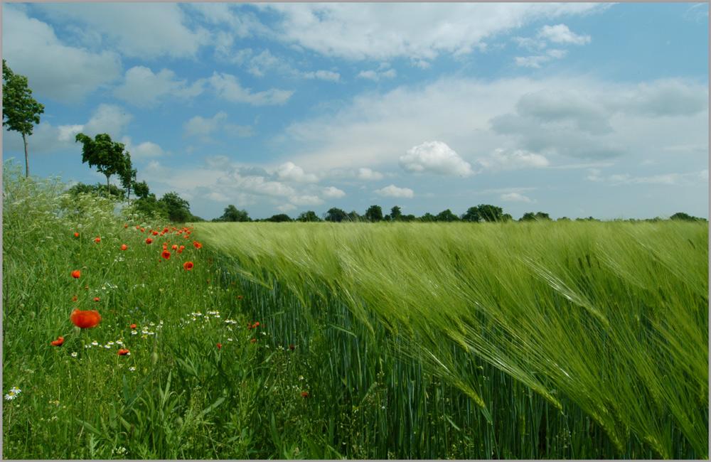 * field*