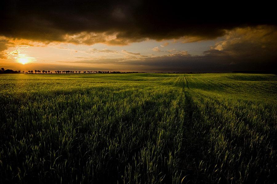 field II