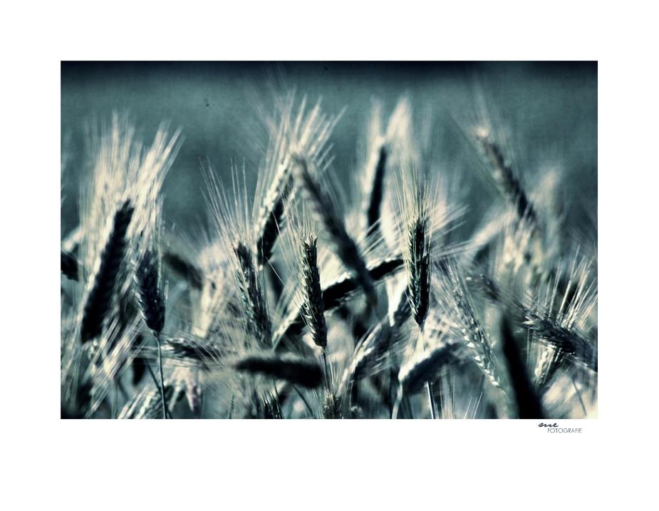 .fields.