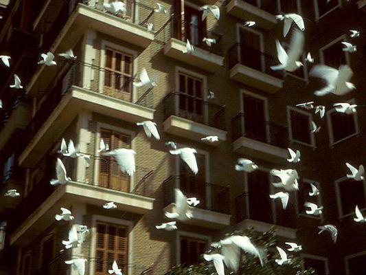 Fiele Fögel