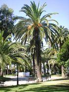 Fier comme le palmier