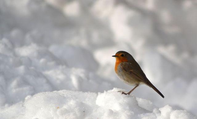 fier malgré la neige