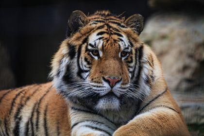 Animali in cattività