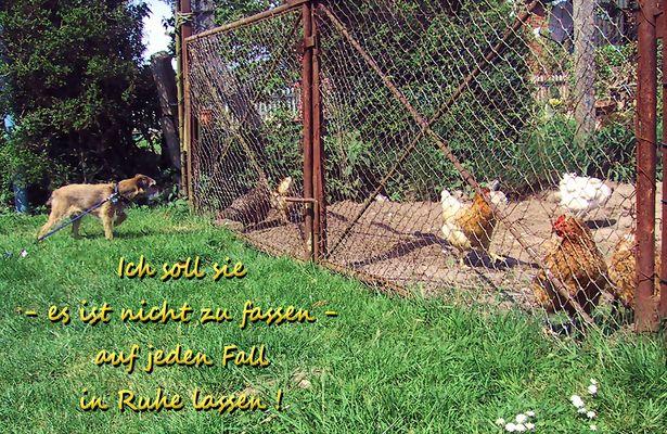 Fietje und die Hühner