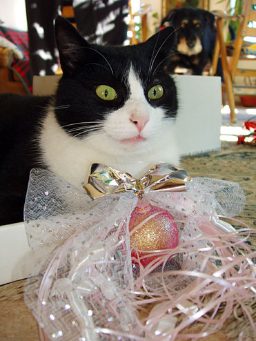 Figaro Happy Christmas
