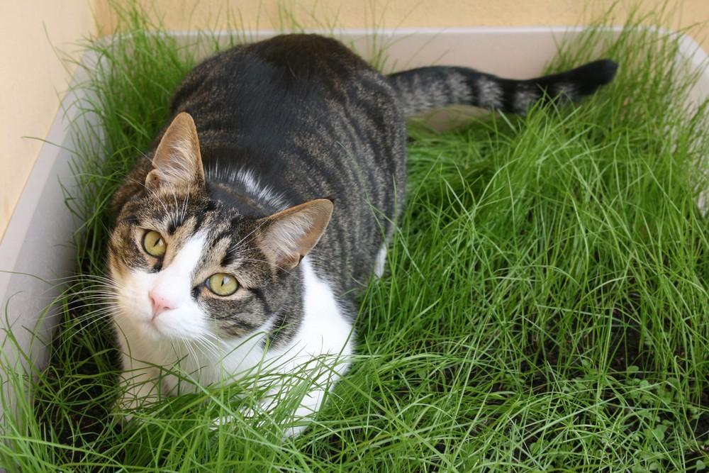 Figaro nel suo nuovo giardino privato!