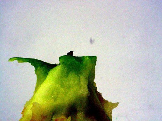 Figur auf dem Apfel