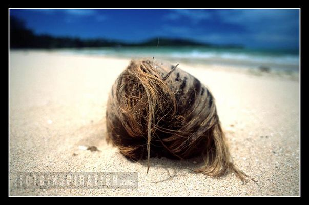 Fiji Island Coconut