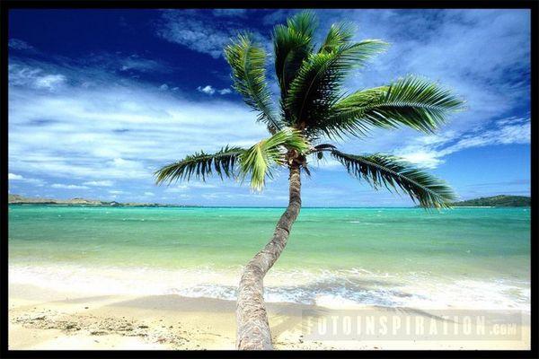 Fiji Island dreaming at the beach