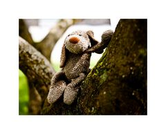 Fikki posiert im Baum...