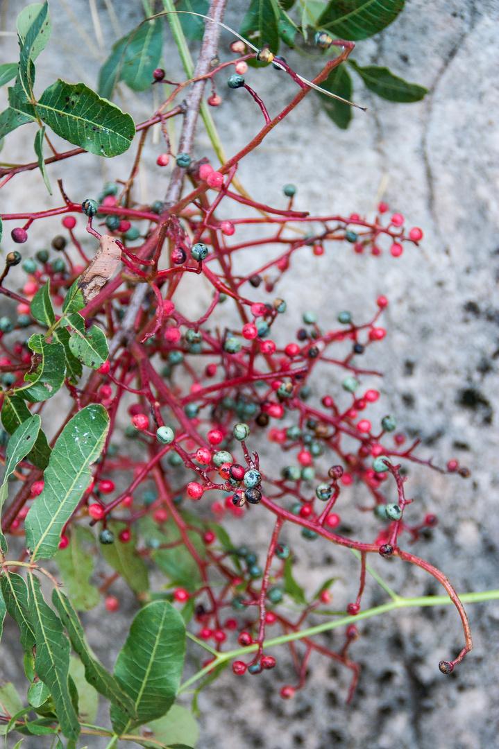 Filigrane Früchte