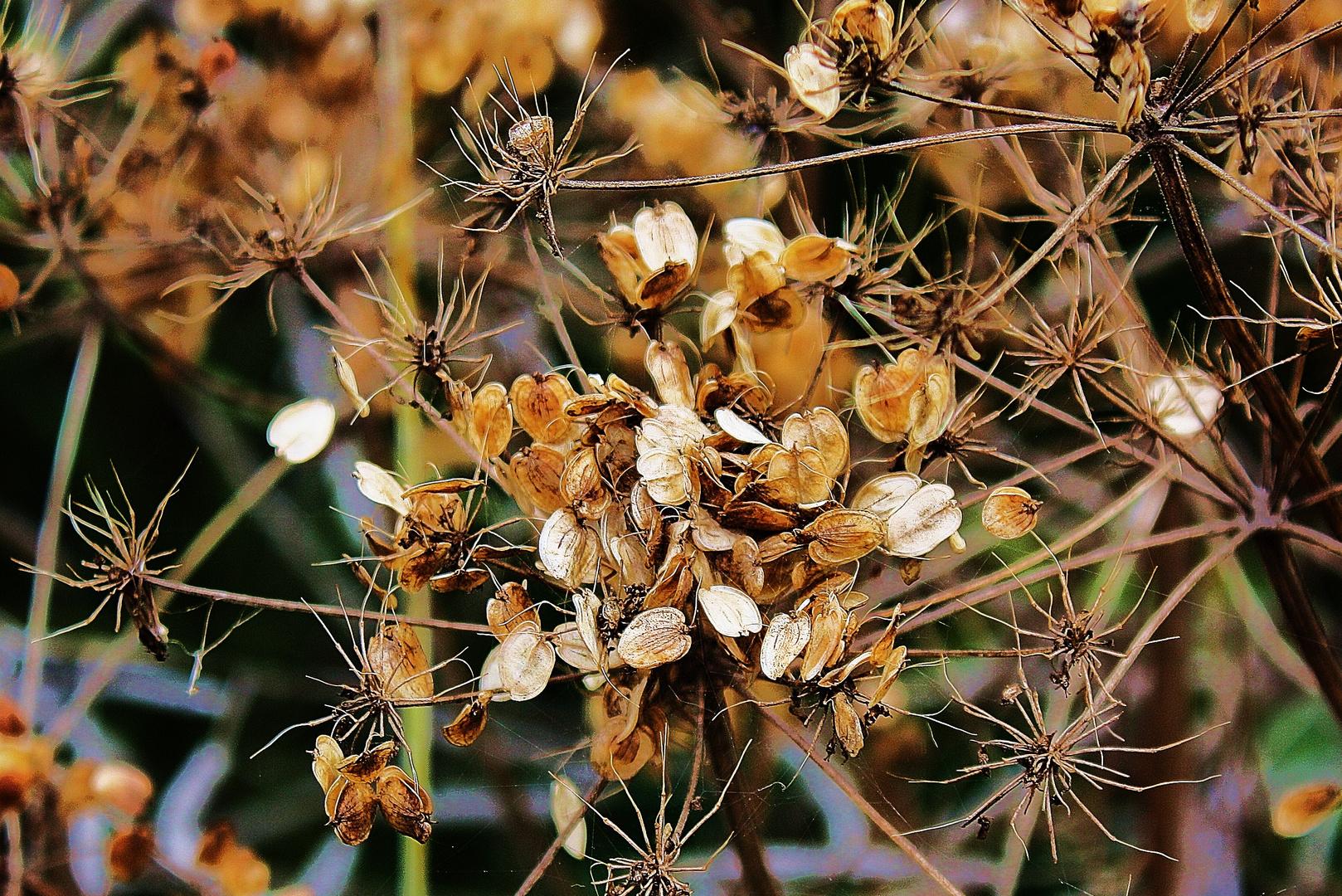 Filigrane Pflanzenstruktur