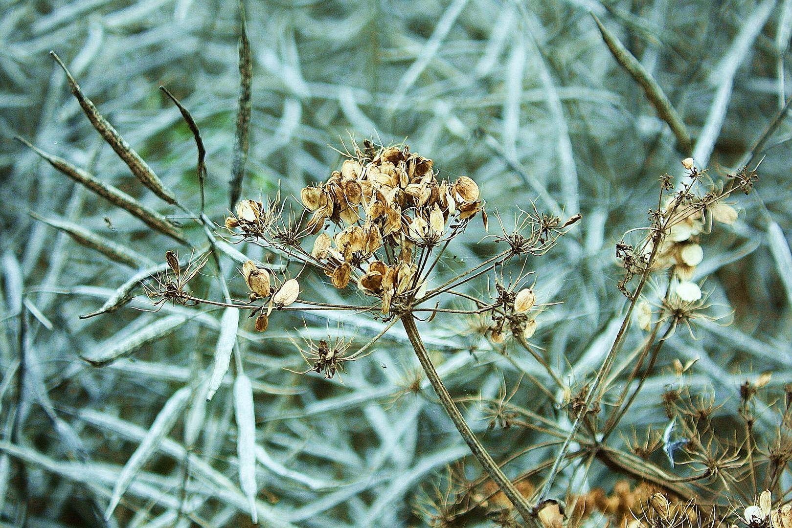 Filigrane Pflanzenstruktur 4