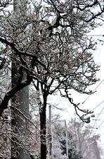 Filigrane Winter Bäume