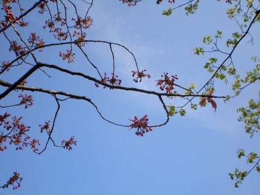 filigraner Frühling