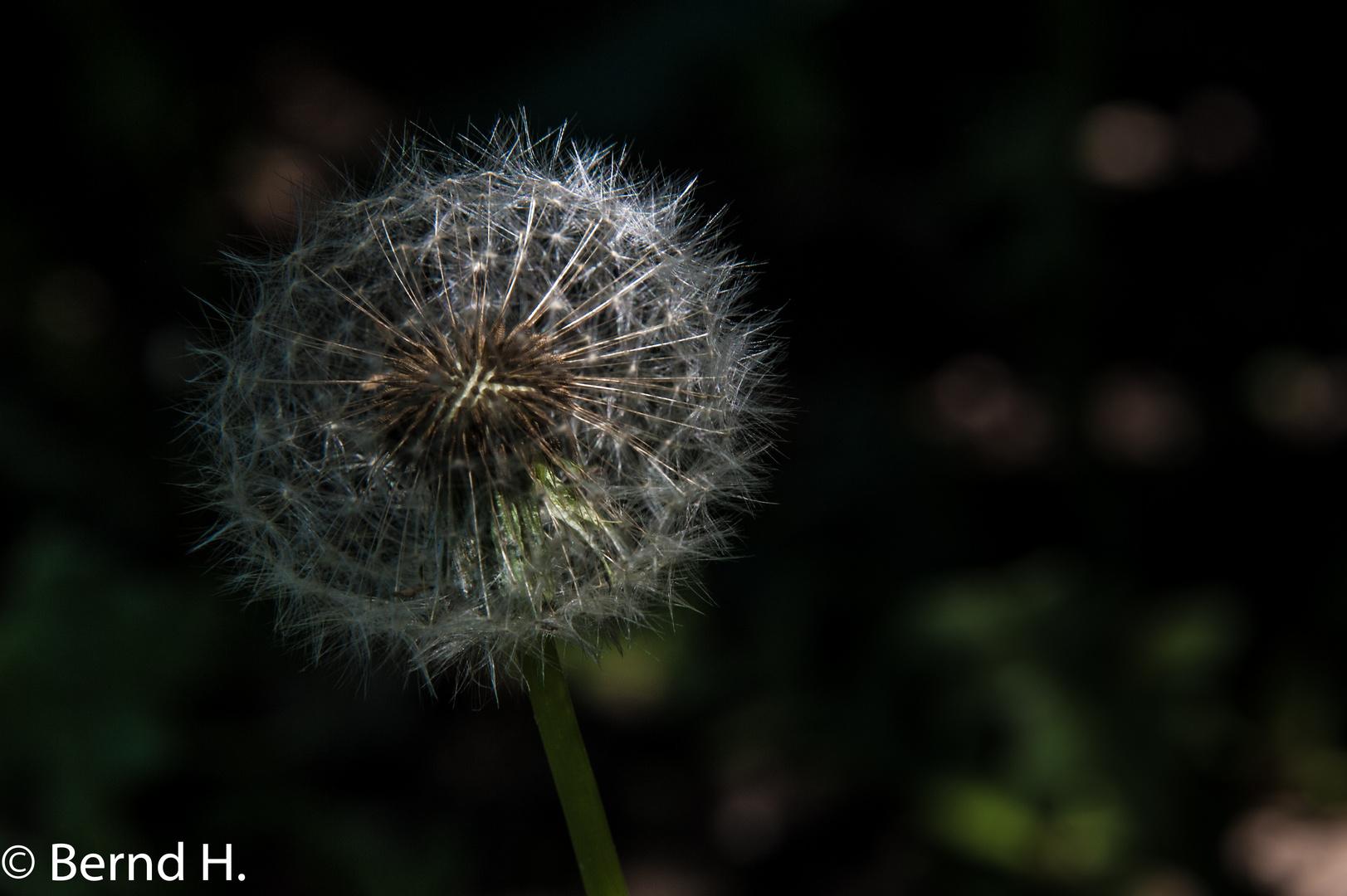 Filigranes Gartenscheusal