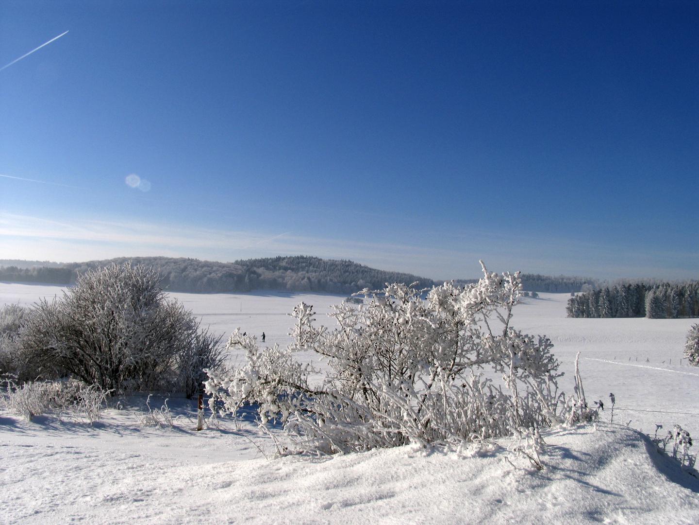 Filigranes im Winter
