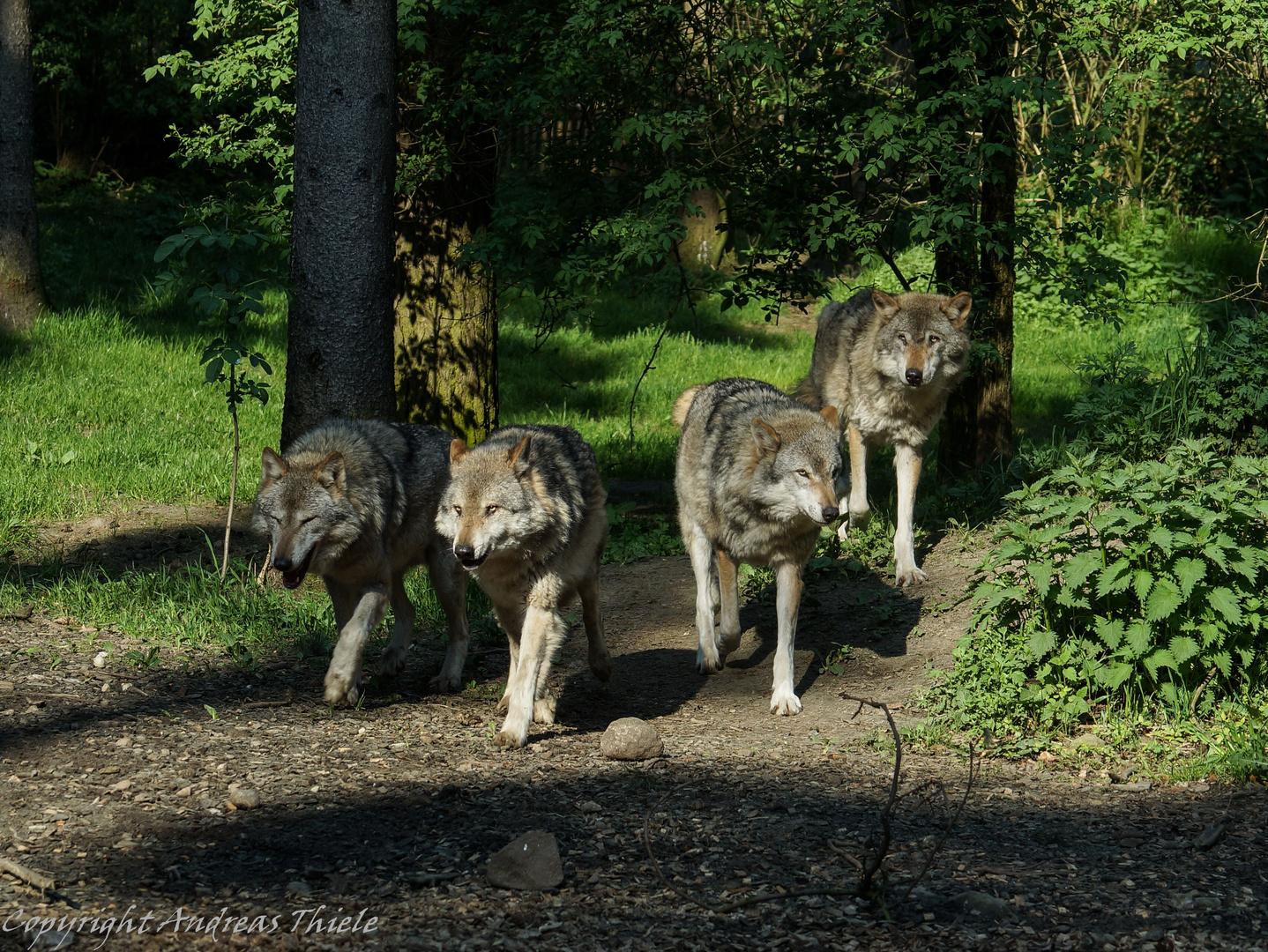Filou mit seiner Truppe 2 :)
