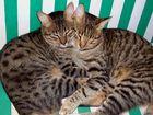 Filou&Tiger