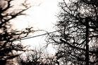 fils et branches