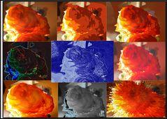 Filterspielereien mit einer Rose