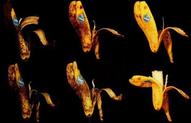 Final Banana