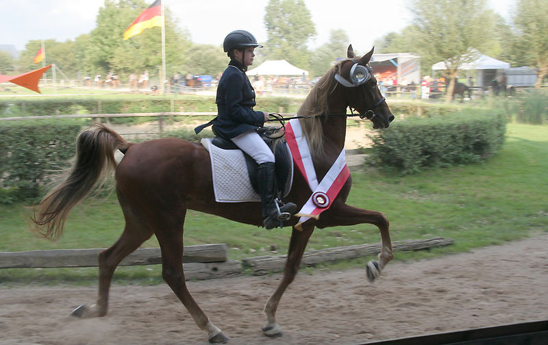 Finale IDMG 2007, Saddlebred Stute Moonlight im Tölt unter 11 jährigem Reiter