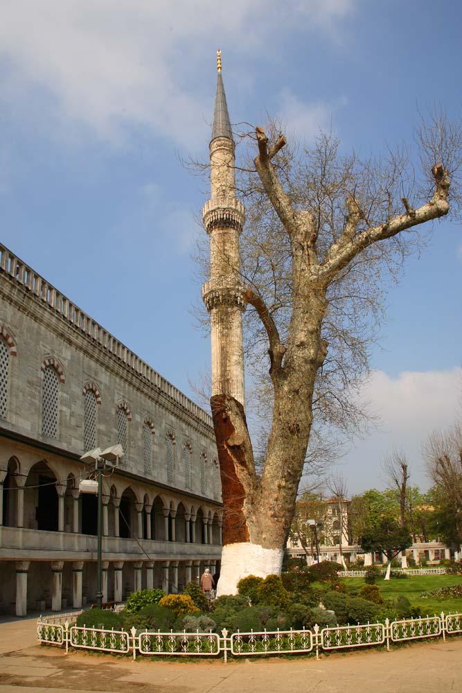 Finalement, quoi de plus naturel qu'un minaret ?