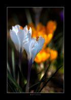 Finalmente primavera.